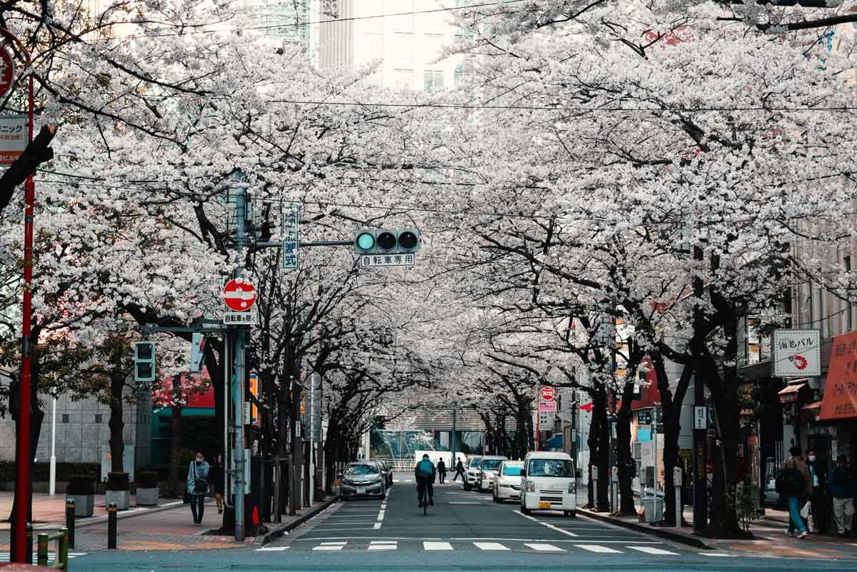 日本盛開櫻花的街景。(圖/Agathe Marty/Unsplash)